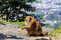 Apa med en behandla som ett barn på apakullen fotografering för bildbyråer