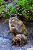 Apa med en behandla som ett barn på apakullen royaltyfri bild