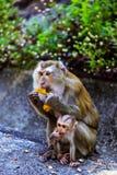 Apa med en behandla som ett barn på apakullen arkivfoto