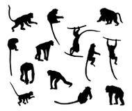 Apa- och apasamling - vektorkontur Royaltyfri Bild