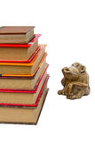 Apa och böcker Arkivfoton