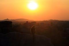 Apa och solnedgång Royaltyfria Foton