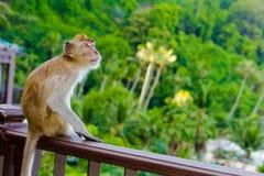 Apa på balkongen Fotografering för Bildbyråer
