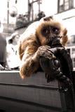 Apa på en bänk Royaltyfria Foton