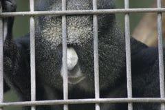 Apa på zoo som ser ledsen Arkivbild