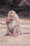 Apa som matar ett barn Royaltyfri Fotografi