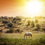 Apacentamiento del caballo imagen de archivo