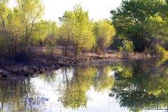 apache bosque del εθνική άγρια φύση καταφ Στοκ Εικόνα