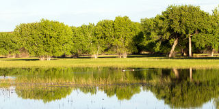 apache bosque del εθνική άγρια φύση καταφ Στοκ φωτογραφίες με δικαίωμα ελεύθερης χρήσης