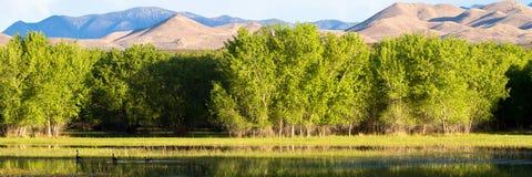 apache bosque del εθνική άγρια φύση καταφ Στοκ φωτογραφία με δικαίωμα ελεύθερης χρήσης