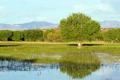 apache bosque del εθνική άγρια φύση καταφ Στοκ εικόνες με δικαίωμα ελεύθερης χρήσης
