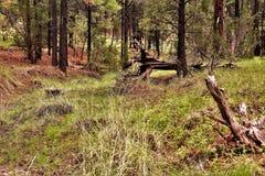 Apache las państwowy, Arizona, Stany Zjednoczone zdjęcia stock