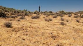 Apache obmycia ślad Phoenix Sonoran prezerwa zdjęcie stock