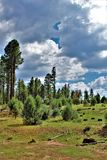 Apache-Sitgreaves εθνικό δρυμός, δρόμος 51, Αριζόνα, Ηνωμένες Πολιτείες Υπηρεσιών του Δασικού Εφαρμογής στοκ εικόνες με δικαίωμα ελεύθερης χρήσης