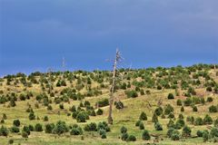 Apache-Sitgreaves εθνικό δρυμός, δρόμος 51, Αριζόνα, Ηνωμένες Πολιτείες Υπηρεσιών του Δασικού Εφαρμογής στοκ φωτογραφία με δικαίωμα ελεύθερης χρήσης