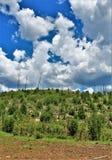 Apache Sitgreaves lasu państwowego rodeo 2002 Pożarniczy odrośnięcie 2018 jak, Arizona, Stany Zjednoczone Fotografia Royalty Free