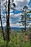 Apache-Sitgreaves National Forest, Arizona, United States. Scenic landscape view of the Apache Sitgreaves National Forest located in east central Arizona, United Stock Photos