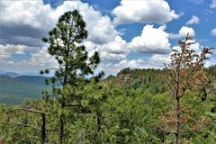 Apache-Sitgreaves National Forest, Arizona, United States. Scenic landscape view of the Apache Sitgreaves National Forest located in east central Arizona, United Stock Image