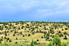Apache-Sitgreaves National Forest, Forest Service Road 51, Arizona, United States. Scenic landscape view of the Apache Sitgreaves National Forest off Forest Stock Images