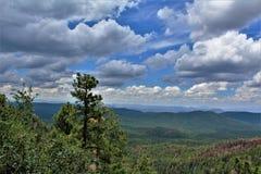 Apache-Sitgreaves nationalskog, Arizona, Förenta staterna Arkivbilder
