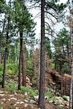 Apache-Sitgreaves nationalskog, Arizona, Förenta staterna Arkivfoto