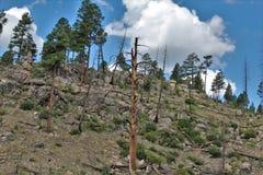 Apache-Sitgreaves nationalskog, Arizona, Förenta staterna royaltyfria bilder