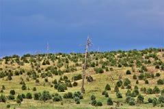 Apache-Sitgreaves nationalskog, Forest Service Road 51, Arizona, Förenta staterna Royaltyfri Foto