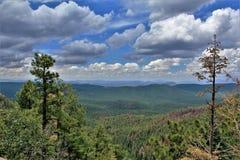 Apache--Sitgreavesstaatlicher wald, Arizona, Vereinigte Staaten Stockfotos