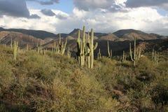apache trail royaltyfria bilder