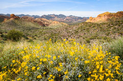 Apache Trail. Valley with Yellow Flowers Royalty Free Stock Photo