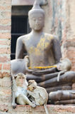 Apafamilj med buddha statybakgrund arkivbild