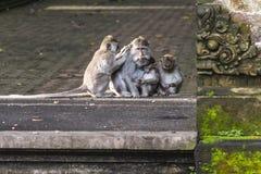 Apafamilj på Bali royaltyfri fotografi