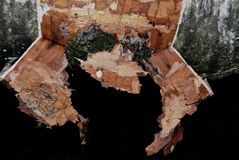 Apagado rasgada corteza de abedul en un árbol Fotografía de archivo libre de regalías