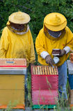 Apairists work with smoker. Apiarist working with smoker above beehive Stock Images
