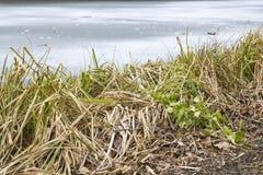 Apaisez et rivage légèrement congelé images stock