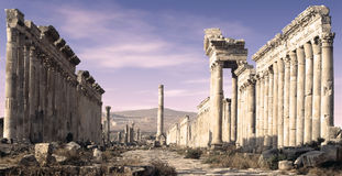 Apamea,叙利亚 免版税库存图片