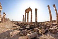 apamea Συρία Στοκ Εικόνες