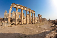 apamea syria royaltyfri foto
