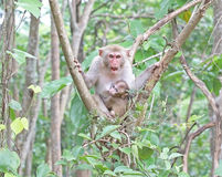 Apamoder och barn på ett träd Arkivfoto