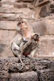 Apamodern och hon behandla som ett barn Royaltyfri Foto