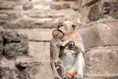 Apamodern och hon behandla som ett barn Fotografering för Bildbyråer