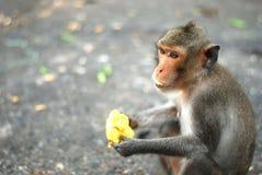 Apan äter mango Fotografering för Bildbyråer