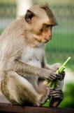 Apan äter mat arkivbilder