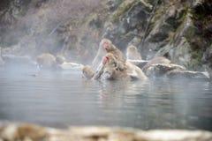 Apan i ett naturligt onsen (den varma våren) arkivbild