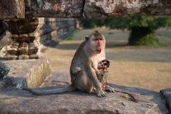 Apan med behandla som ett barn Arkivbilder