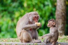 Apan med behandla som ett barn att sitta i naturen royaltyfria bilder