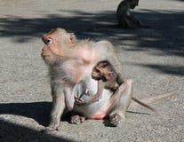 Apan med gröngölingen/den kvinnliga apan som rymmer henne, behandla som ett barn Teman: djur Arkivbilder