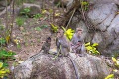 apan och hennes små behandla som ett barn i nationalparken som krabba-äter macaquen Royaltyfria Bilder