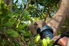 Apan ser kameran på ön Koh Ped Royaltyfri Fotografi
