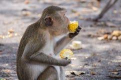 Apan tycker om att äta Arkivfoton